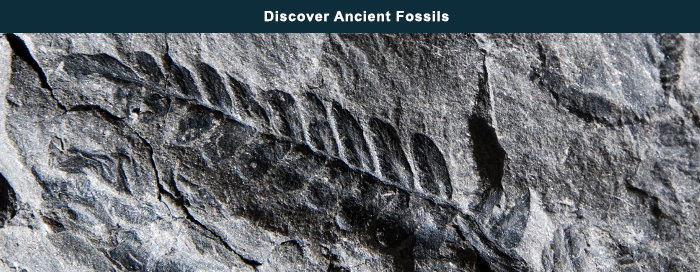 Discover Ancient Fossils