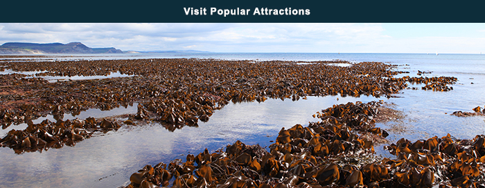 Visit Popular Attractions