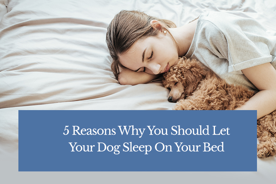 5 Reasons Why You Should Let Your Dog Sleep On Your Bed ...